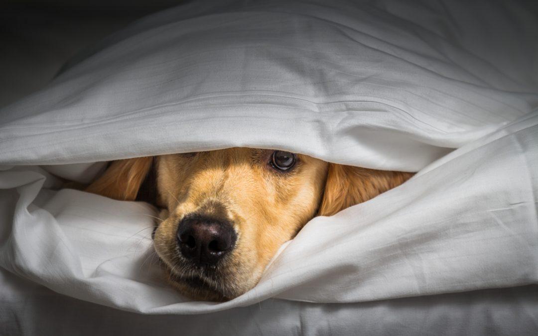 Blivit med hund under Corona?